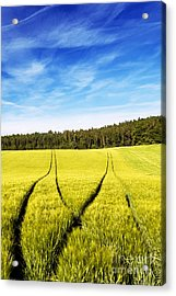 Tractor Tracks In Wheat Field Acrylic Print by Carsten Reisinger