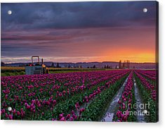 Acrylic Print featuring the photograph Tractor Waits For Morning by Mike Reid