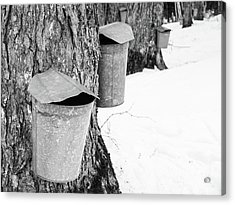 Acrylic Print featuring the photograph Traditional Maple Sap Collection Galvanized Buckets Vermont by Edward Fielding