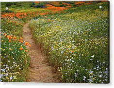 Acrylic Print featuring the photograph Trail Of Wildflowers At Diamond Lake In California by Jetson Nguyen