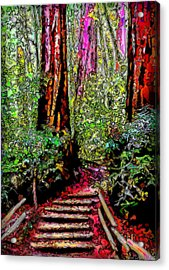 Acrylic Print featuring the digital art Trail Through The Redwoods - Tamalpais California by Joel Bruce Wallach