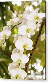 Trailing Orchids Acrylic Print by A New Focus Photography