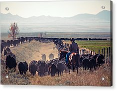 Trailing The Herd Acrylic Print by Todd Klassy