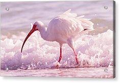 Tranquil Beauty Cortez Beach Acrylic Print by Betsy Knapp