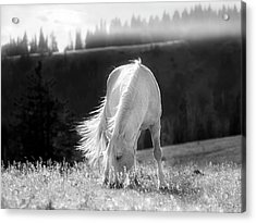Acrylic Print featuring the photograph Tranquil Black And White 3 by Leland D Howard