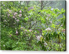 Acrylic Print featuring the photograph Tranquil Nature by Chris Scroggins