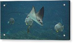 Tranquil Sea Creatures Acrylic Print by Betsy Knapp