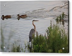 Tranquil Waterlife Acrylic Print by Cathy  Beharriell