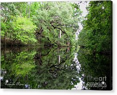 Acrylic Print featuring the photograph Tranquility by Barbara Bowen