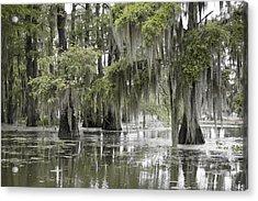 Tranquility Swamp Acrylic Print by Betsy Knapp