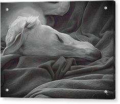 Tranquility Acrylic Print by Tamara Carey