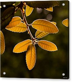 Translucent Leaves Acrylic Print