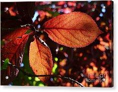 Transparence 17 Acrylic Print
