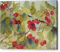 Acrylic Print featuring the painting Traverse City Cherries by Sandra Strohschein