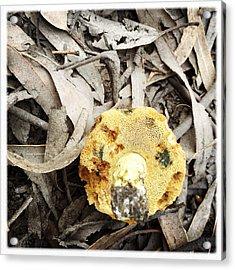 Treasure Hunt Acrylic Print by Kelly Jade King