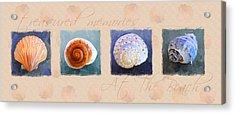 Treasured Memories Sea Shell Collection Acrylic Print by Jai Johnson