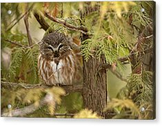 Acrylic Print featuring the photograph Treasures Of The Forest by Everet Regal