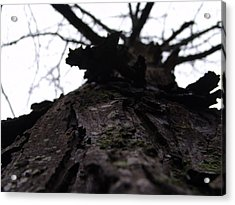 Tree 004 Acrylic Print by Ryan Vaal