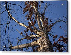 Tree And Branch Acrylic Print