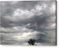 Tree And Cloud Acrylic Print by Stephen Doughten