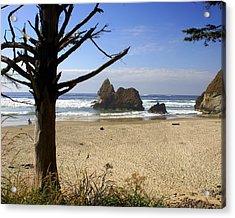 Tree And Ocean Acrylic Print by Marty Koch
