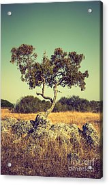 Tree And Rocks Acrylic Print