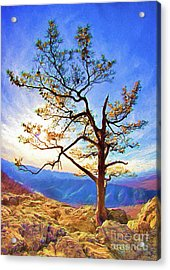 Acrylic Print featuring the painting Tree And Rocks In The Blue Ridge Near Sunset Ap by Dan Carmichael