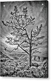 Tree And Rocks In The Blue Ridge Near Sunset Bw Acrylic Print by Dan Carmichael