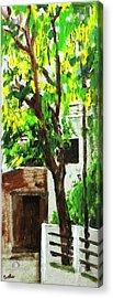 Tree And Shade Acrylic Print by Usha Shantharam