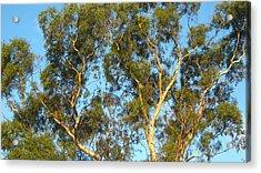 Tree And Sky Acrylic Print