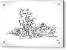 Acrylic Print featuring the drawing Tree And Some Rocks by Padamvir Singh