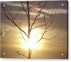 Tree And Sun Acrylic Print by Richard Mitchell