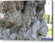 Tree Art Acrylic Print by Carrie Maurer