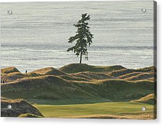 Tree At Chambers Bay Acrylic Print