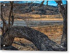 Tree At Elizabeth Lake Acrylic Print