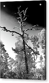 Acrylic Print featuring the photograph Tree At Halpatiokee by Don Youngclaus