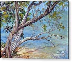 Tree At Islamorada Key Acrylic Print