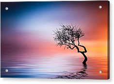 Tree At Lake Acrylic Print by Bess Hamiti