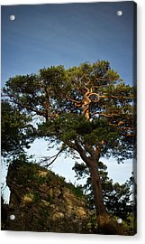 Tree At Maccarthy Mor Castle Acrylic Print by Douglas Barnett