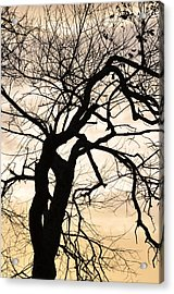 Tree At Sunrise Acrylic Print by Rose  Hill
