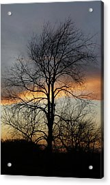 Tree At Sunset Acrylic Print by Jerry Weinstein