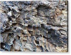 Acrylic Print featuring the photograph Tree Bark 1 by Jean Bernard Roussilhe
