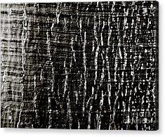 Tree Bark Acrylic Print by Charmian Vistaunet