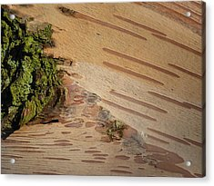 Tree Bark With Lichen Acrylic Print by Margaret Brooks