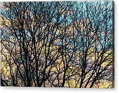 Acrylic Print featuring the photograph Tree Branches And Colorful Clouds by James BO Insogna
