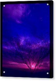 Tree By Night Acrylic Print
