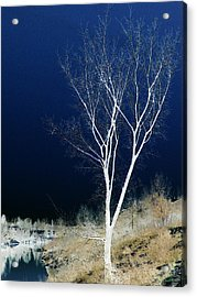 Acrylic Print featuring the photograph Tree By Stream by Stuart Turnbull