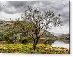 Tree By The Lake Acrylic Print
