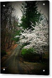 Tree By The Road Acrylic Print by Joyce Kimble Smith