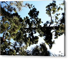 Tree Canopy Acrylic Print by Karen Sydney